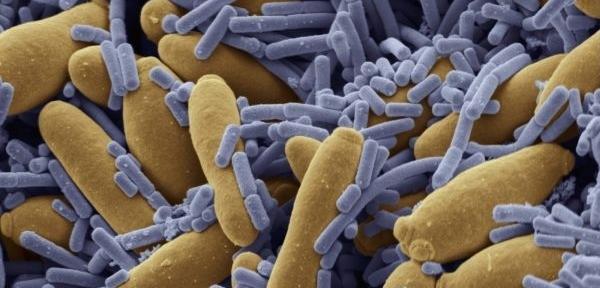 Nová bakterie je původně z indie a pákistánu (ilustrační foto)