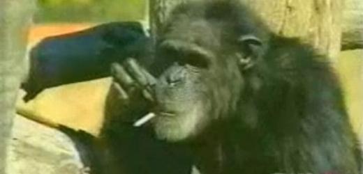 randění pro kuřáky randit se stejnými kluky