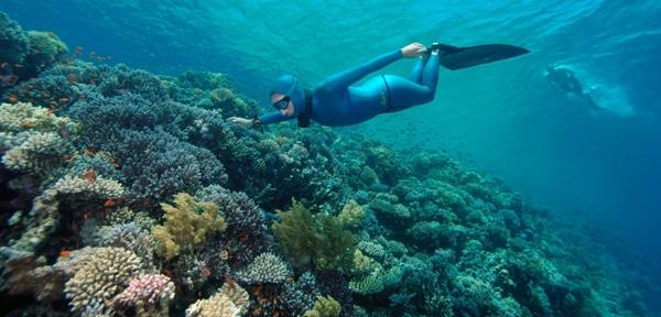 Fotografije morskih dubina - Page 10 Crop-28105-more