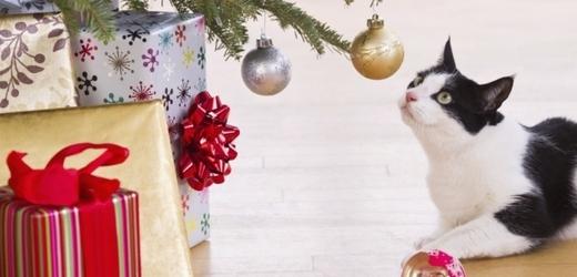 Kočku nejvíc potěší nová hračka, kterou by mohla ulovit. Ale možná se spokojí i s vánoční výzdobou...
