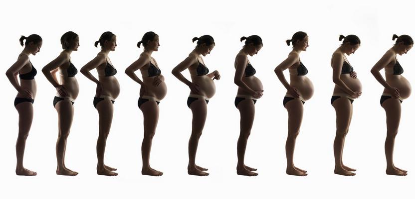 Почему быстро растёт живот у беременных 216