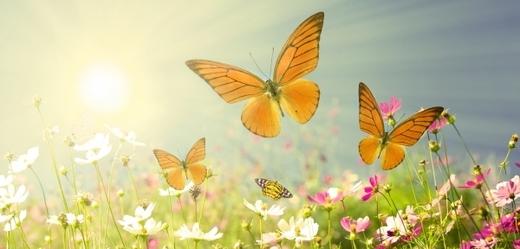Počet lučních motýlů dramaticky klesá (ilustrační foto).
