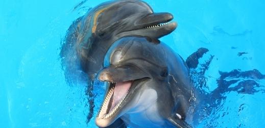 Zjištění vědců delfíny pasovalo do pozice jediných savců kromě člověka, kteří používají jména ostatních, aby upoutali jejich pozornost (ilustrační foto).