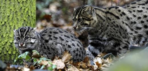 Zdarma velká kořist kočička