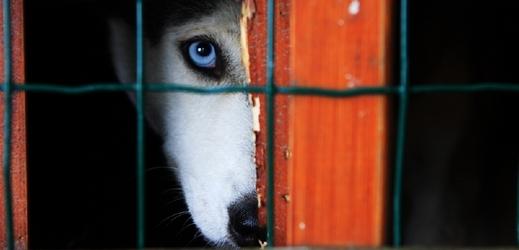 V Česku se často objevují chovatelé, kteří se k psům chovají špatně (ilustrační foto).