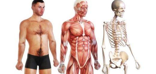 dystrofie svalů