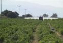 Kdo nestříká, přijde o úrodu (ilustrační foto).