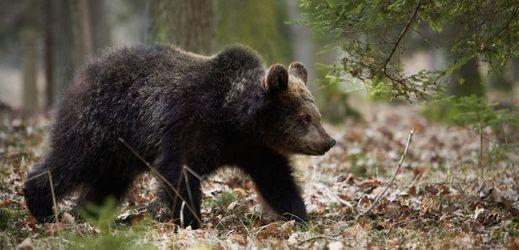 medvědí randění jason thompson všeobecné nemocnice datování