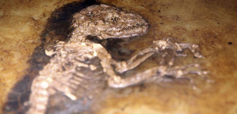 2 typy fosilií