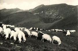 Ovce v Nízkých Tatrách na staré pohlednici Klubu českých turistů