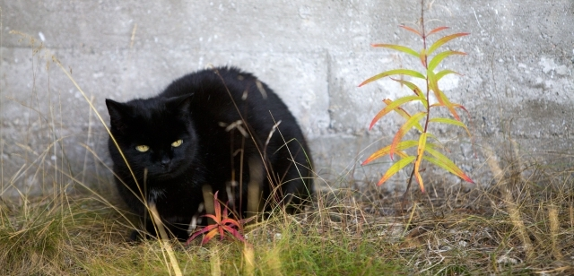 černá kočička naplněna