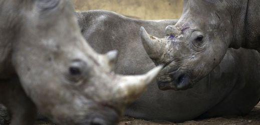 rhino randění datování online stránek Filipíny