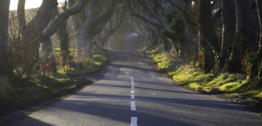 Dark Hedges.