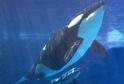 Velryba (ilustrační foto).