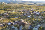 Úder blesku zabil v Norsku stádo více než 300 sobů