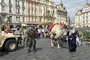 Kde Konvička vzal velblouda?