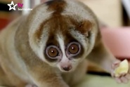 TV Barrandov: Návštěvníci zoo běželi pro outloně