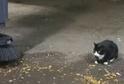 Sylvestr, člen kočičí krysí hlídky v New Yorku.