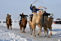 Velbloud, který zpestří víkendové lyžování na Lipně, pochází z Mongolska, kde jsou mrazy běžné (ilustrační foto).