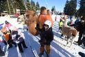 Zpestřením pro lyžaře v areálu v Lipně nad Vltavou byla 21. ledna návštěva velblouda a lamy.
