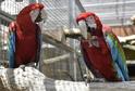 V papouščí zoo je k vidění přes 200 opeřenců.