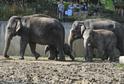 Sloní skupinu v ostravské zoo nyní tvoří čtyři samice.