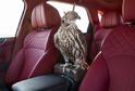 Speciální edice SUV od Bentley pro milovníky sokolnictví.