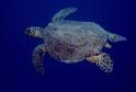 Rehabilitační centrum bude sloužit zraněným mořským želvám nebo želvám zabavených pašeráky.