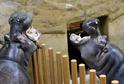 Návštěvníci budou moci poznat život v zoo po zavírací době.