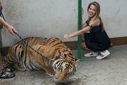 Tady šlo o život! Česká Miss Bezděková vlezla do klece k tygrovi