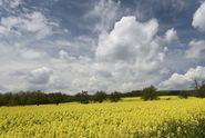 Jurečka chce zmenšit pole. Kvůli divočákům