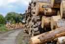 Stavební dřevo (ilustrační foto).