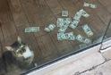 Kocourek vybírá škvírou mezi dveřmi peníze na charitu.