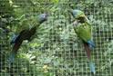 Ostravská zoo chová přes 400 druhů zvířat.