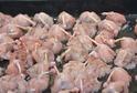 Kuchaři budou používat suroviny, jako jsou žabí stehýnka, křepelky, perličky a mufloní maso.