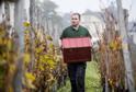 Sběr uzrálých hroznů z nejznámějšího kutnohorského vinohradu u chrámu sv. Barbory se konal 21. října.