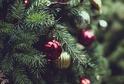Vánoční strom (ilustrační foto).