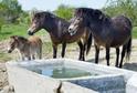 Divocí koně budou vypuštěni na území Přírodní památky Na Plachtě a v Ptačím parku u Jaroměře.