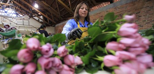 Kolumbie je jedním z největších vývozců květin na světě.