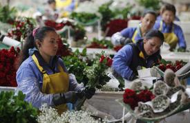 """Den svatého Valentýna, kdy Američané utrácí za dárky, je """"zlatým dolem"""" pro Kolumbii."""