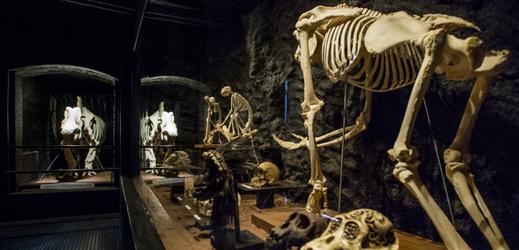 K vidění je více než 330 kosterních exemplářů zvířat celého světa.