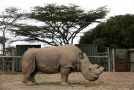 Sudán, poslední nosorožec severní bílý, uhynul v pondělí.