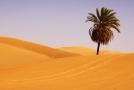 Ilustrační foto ze Sahary.