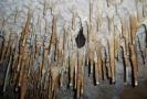 V Javoříčských jeskyních budou o víkendu probouzet netopýry (ilustrační foto).