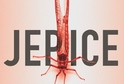 Vyhrajte vynikající britskou krimi Jepice z nakladatelství DOMINO