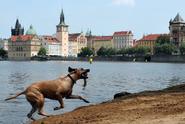 Horký vzduch rozpálí Česko, má být až 31 °C