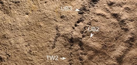 V Číně našli nejstarší zkamenělé otisky končetin.