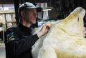 Úřady zadržely tisíce pašovaných zvířat a tuny jejich částí.