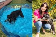 Heidi Janků koupila psovi bazén!