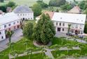 Mezi finalisty ankety Strom roku postoupila např. bohdanečská lípa svobody (na snímku).